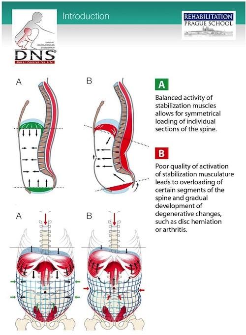 Diaphragmatic Motion Breathing